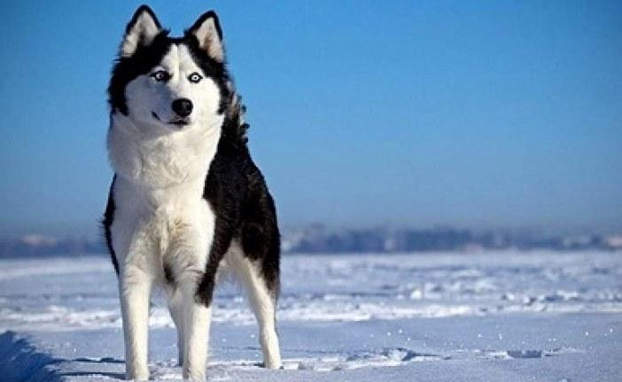 أول كلب فارق الحياة متأثراً بـ كورونا